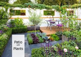 cover_How to Decorate Your Patio with Plants