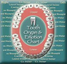 Left Foot Organ Chart Tooth Chart Click Click To See Related Organs And