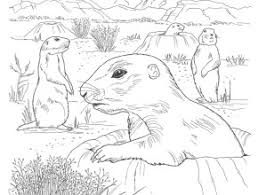 Brown Prairie Dog Coloring Page Print Download Click The Prairie