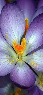 Iphone Purple Flower Wallpaper Download ...
