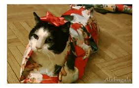 Gift  Find U0026 Share On GIPHYChristmas Gifts Cats
