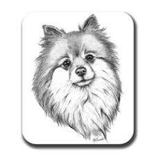 12 Beste Afbeeldingen Van Hond Siska In 2019 Duitse Spitz Honden