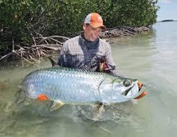 Fish Weight Estimator