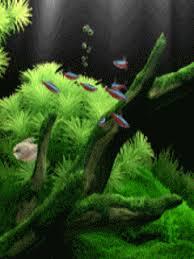 Tyler lockwood tumblr gif skyrim 1920×1080. Fish Mobile Wallpaper Animated Wallpapers For Mobile Moving Wallpapers Nature Wallpaper