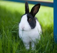petsmart animals bunny. Contemporary Petsmart New Pets Inside Petsmart Animals Bunny PetSmart