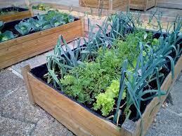 rooftop farming procedure benefits
