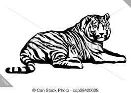tiger black and white drawing. Plain White Black And White Ink Draw Tiger Vector Illustration To Drawing R