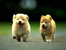 Cute Dog Puppies Wallpaper