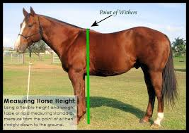 Miniature Horse Weight Chart Horse Health Why Horse Height And Weight Matter Horse