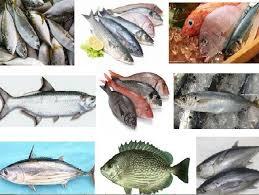 100 Nama Ikan Dan Gambarnya
