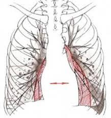 Реферат Гипостатическая пневмония Реферат Гипостатическая пневмония