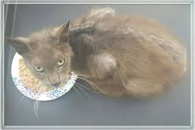 emaciated cat. Interesting Emaciated Donate Now Not Now And Emaciated Cat R