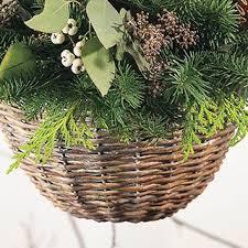 Christmas Gift PlantsChristmas Gift Plants
