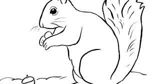 Squirrel Coloring Sheet Squirrel Coloring Pages Squirrel Coloring