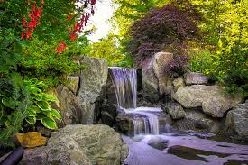 7 top plants for japanese gardens the
