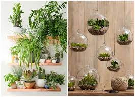 indoor plants 5 easy home decor ideas