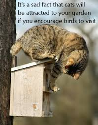 my feline visitors cats attracted to bird houses