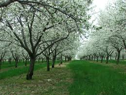 129 Best Clean Cut Services Images On Pinterest  Tree Experts In Fruit Trees In Michigan