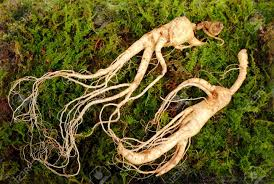 Wild Korean Ginseng Root Wild Ginseng Can Be Processed To Be