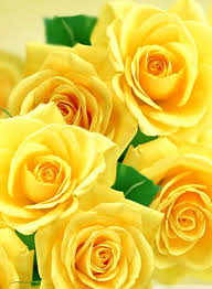 yellow roses and erflies 4k hd desktop wallpaper for 4k