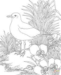Small Picture Seagulls coloring pages Free Coloring Pages