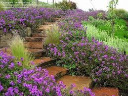 Small Picture How To Design A Garden On A Slope Best Garden Reference