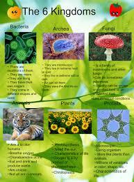 6 Kingdoms Of Life Chart