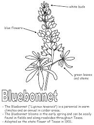 Bluebonnet with labels