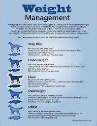Dog Food Chart By Weight Our Guide On The Best Dog Food For Underweight Dogs