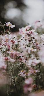 Pastel pink flowers iPhone Wallpapers ...