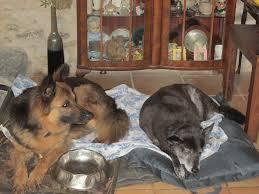 Betsy, Rameses, Global and Herbie all... - ARK - Animal Rescue Kerala |  Facebook