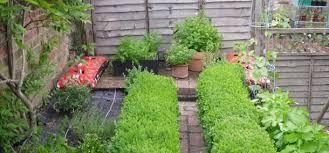 how to grow a herb garden. Where To Grow Herbs Outdoors How A Herb Garden