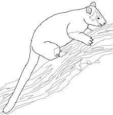 Small Picture Tree kangaroo coloring pages Free Coloring Pages