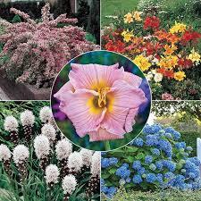 beauty garden at spring hill nurseries