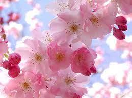Pink Flower Desktop Wallpapers ...