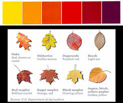 Fall Leaf Color Chart Home Made Diy Decorating In Warm Fall Colors In 2019 Fall