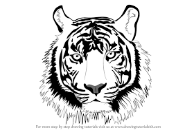 tiger face drawing pencil. Delighful Face How To Draw A Tiger Face And Drawing Pencil E