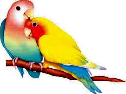 love birds wallpapers hd free for desktop magazine fuse