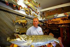 taxidermist rick lax holds a replica of a tiger muskie that was and released by