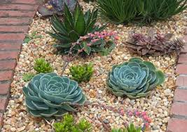 how to design a succulent garden