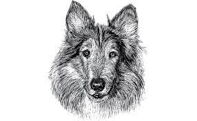 Come Fare Il Disegno A Matita Di Un Cane Deabydaytv