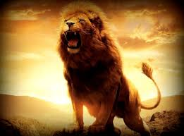angry lions hd wallpapers collection item 3825154