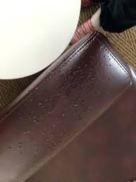 bed bugs in leather couch how to treat furniture for and sofa