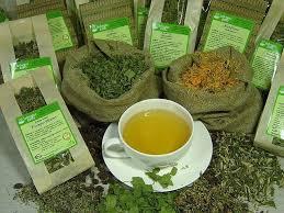 herbal tea gardens how to use tea plants for a garden