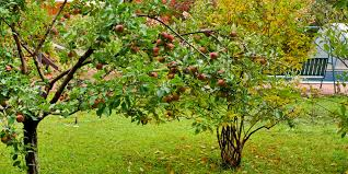 How Long Does It Take Fruit Trees To Bear Fruit Bunnings