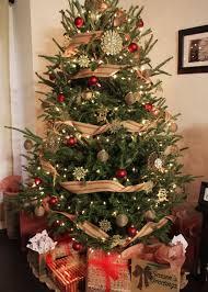 The Dogwood TreeThe Living Christmas Tree Knoxville Tn