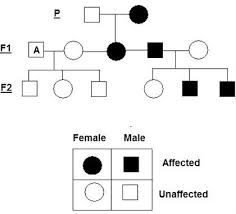 Solved Attached Is A Pedigree Chart For An Autosomal Rece