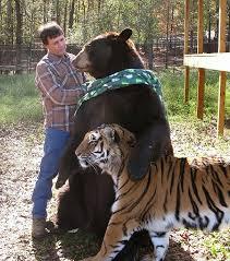 Resultado de imagen para ANIMALES AMISTAD