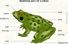 Parts Of A Frog Frog Visual Dictionary