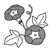画像 素材集綺麗でアサガオヒマワリのイラストまとめ Naver まとめ